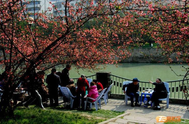 府南河畔,海棠花下,春光明媚,饮茶聊天,其乐融融
