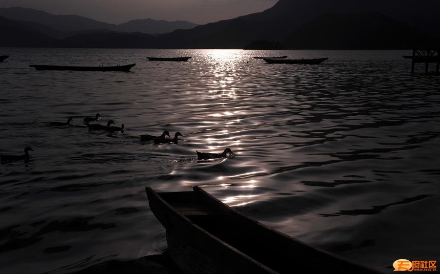 3-湖鸭.jpg