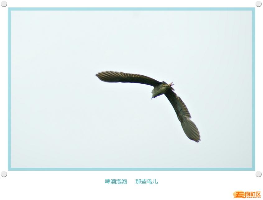 DSC00081_副本.jpg