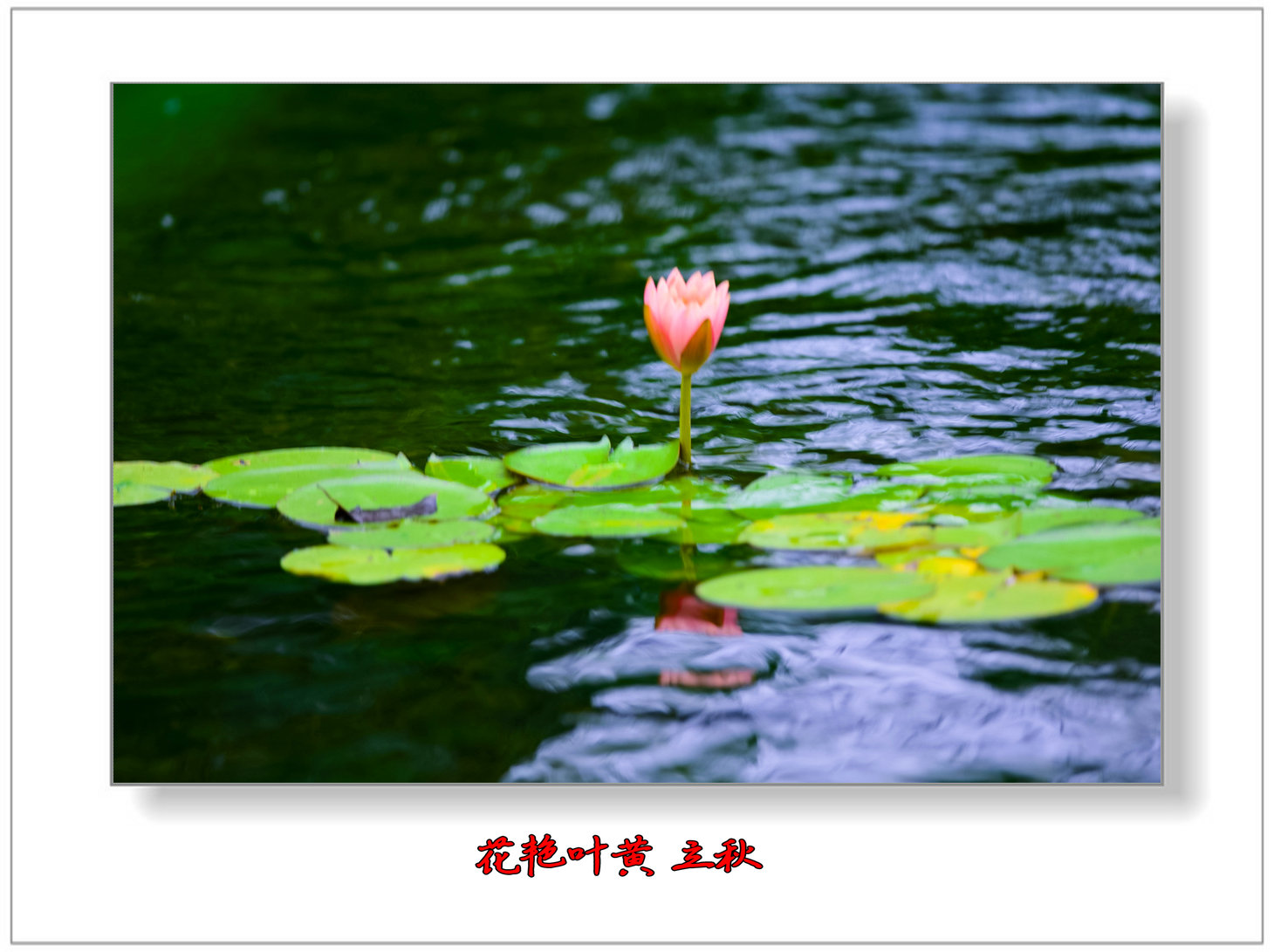 花艳叶黄 立秋