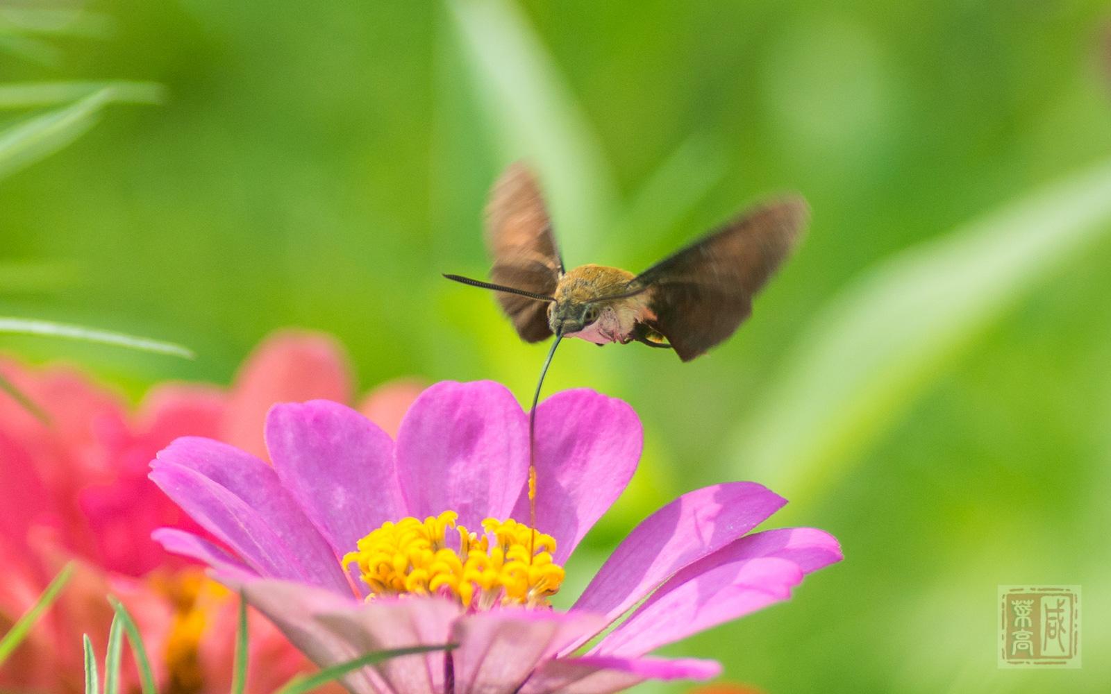 花与蛾-3.jpg