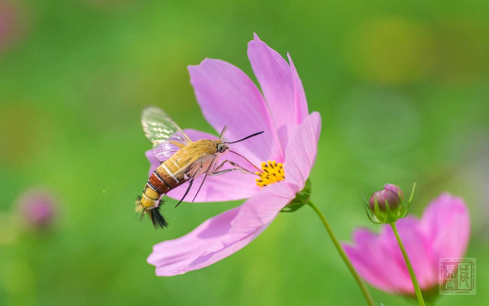 花与蛾-4.jpg