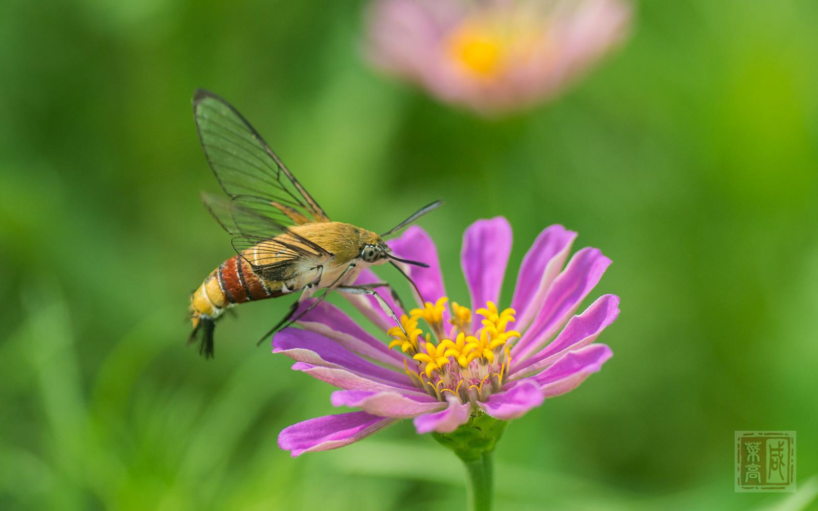 花与蛾-6.jpg