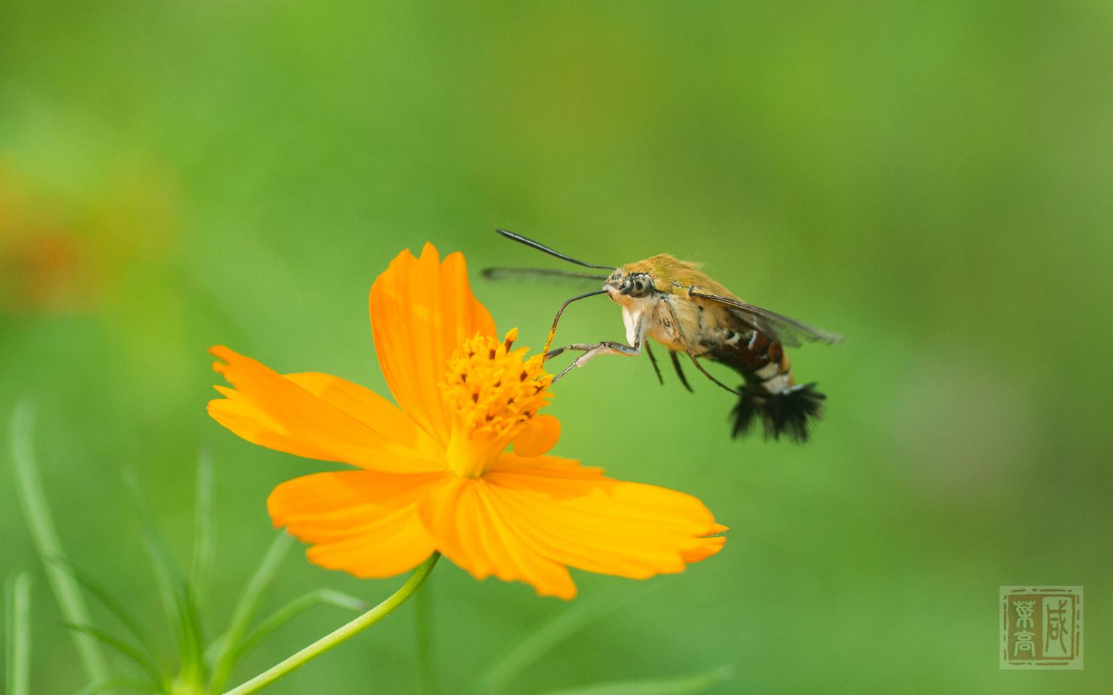 花与蛾-7.jpg