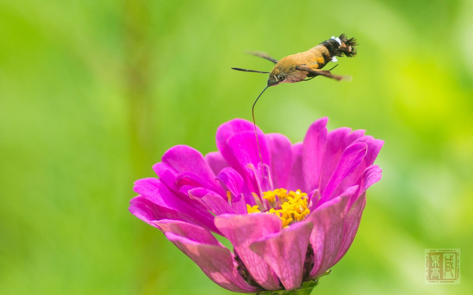花与蛾-2.jpg