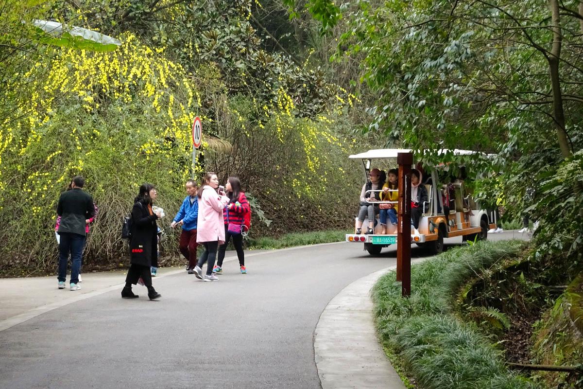 【春回大地】走近熊猫繁育基地