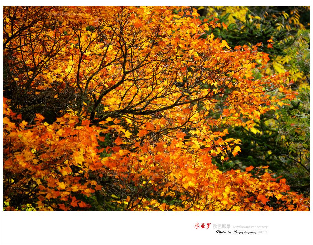 N_DSC46169.jpg