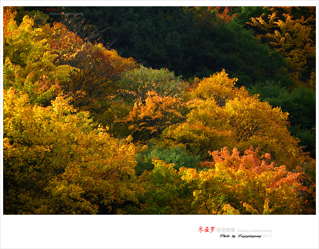 N_DSC46179.jpg