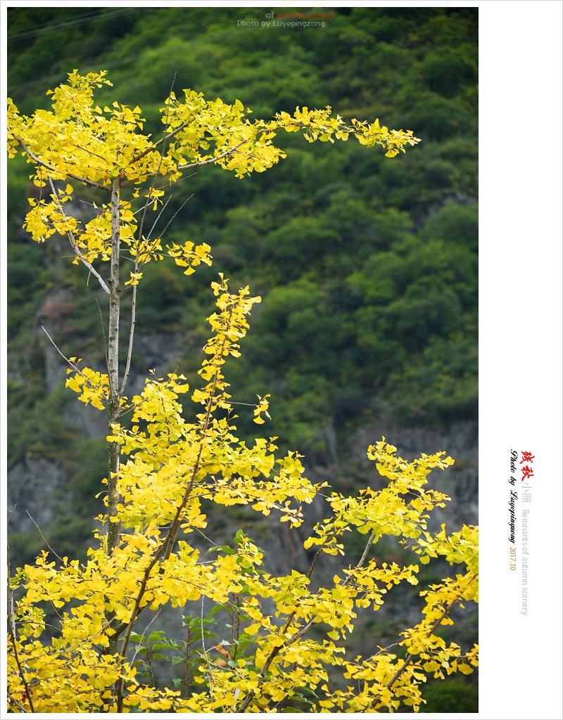 N_DSC45900.jpg