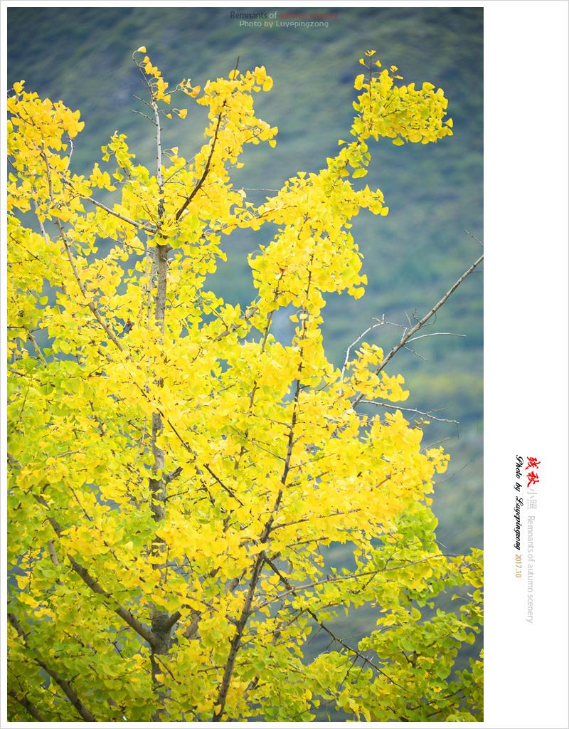 N_DSC45901.jpg