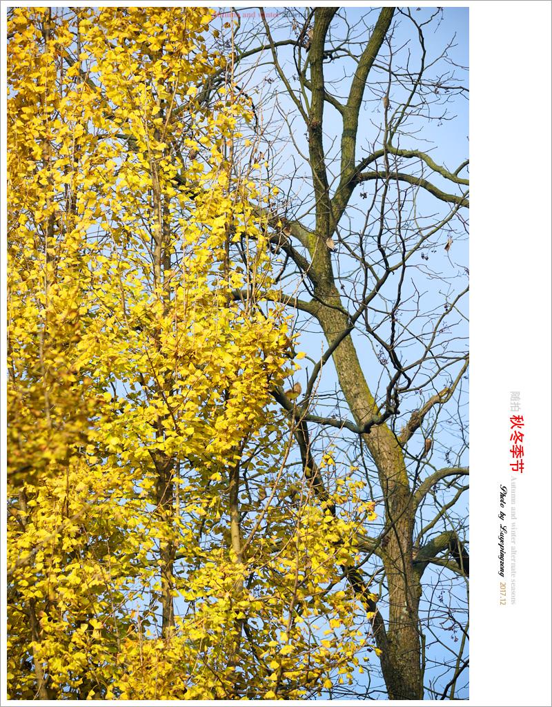 N_DSC46680.jpg