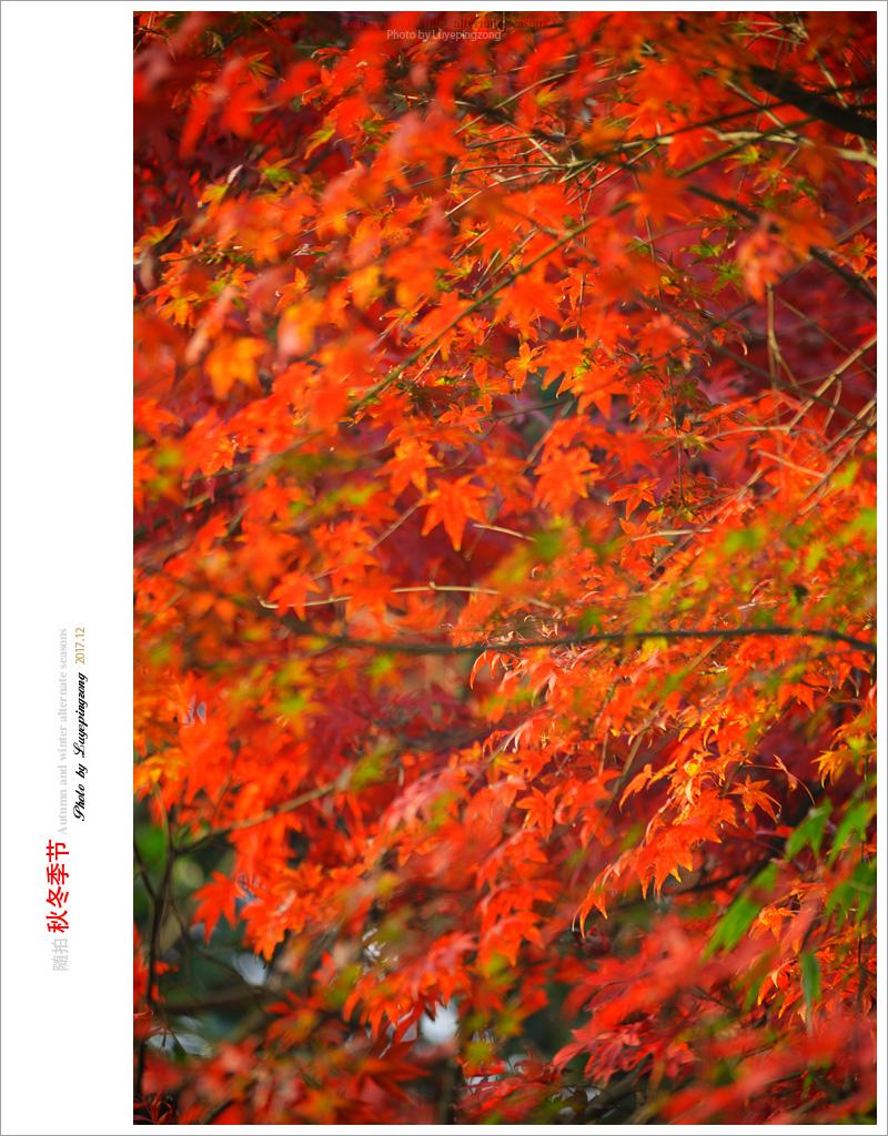 N_DSC46710.jpg