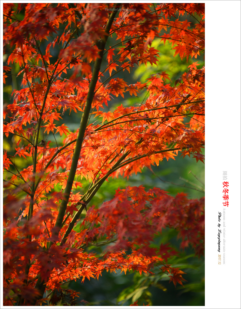 N_DSC46713.jpg