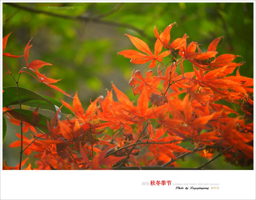N_DSC46720.jpg
