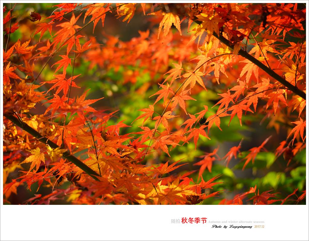 N_DSC46729.jpg