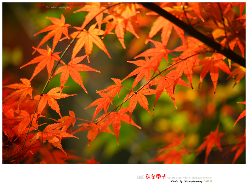 N_DSC46731.jpg