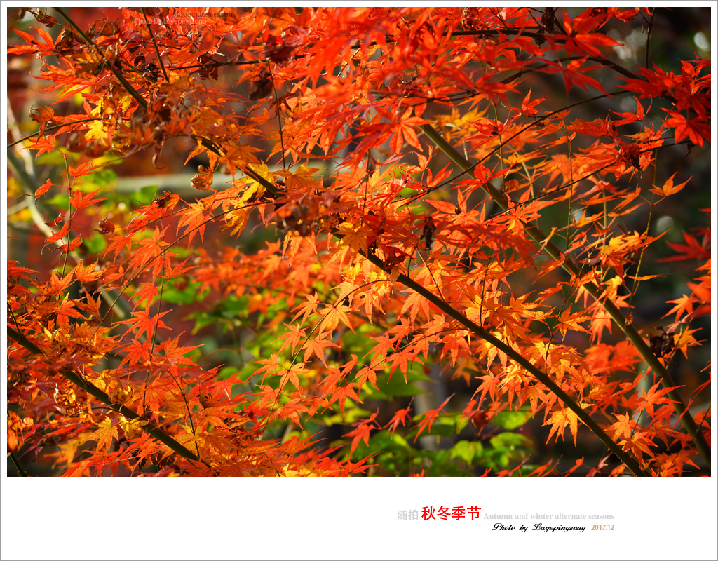 N_DSC46732.jpg