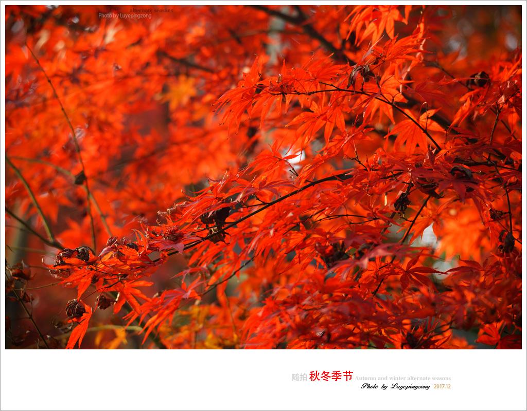N_DSC46733.jpg