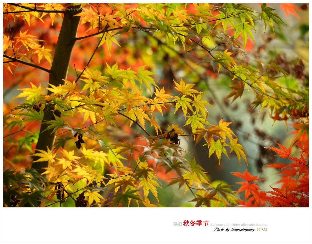 N_DSC46736.jpg