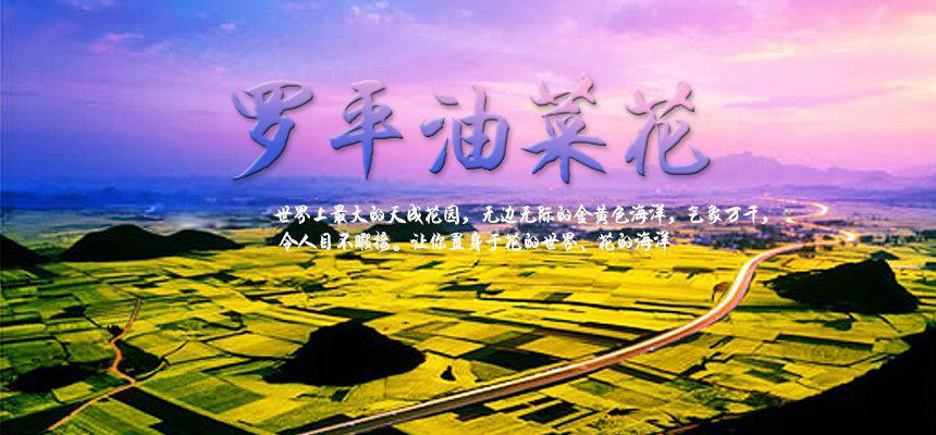 罗平油菜花75676.jpg