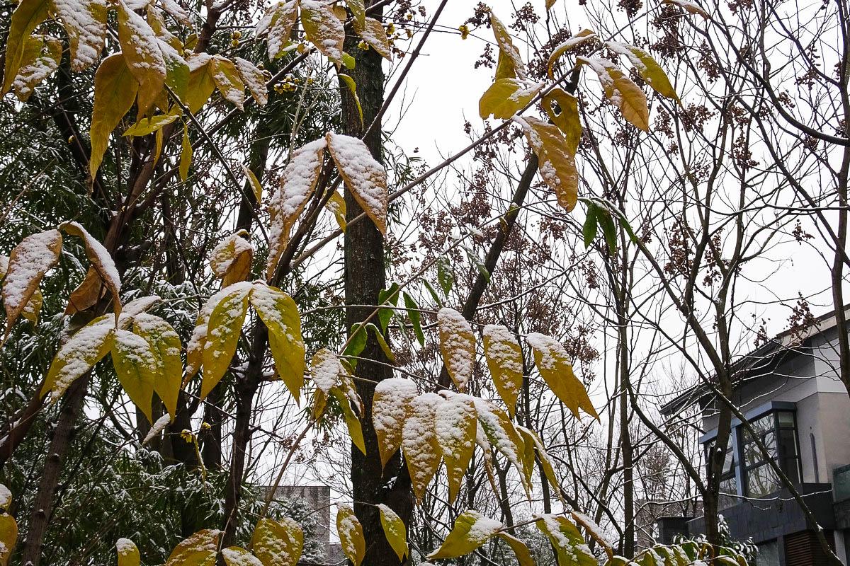 【新年新貌】喜见初雪