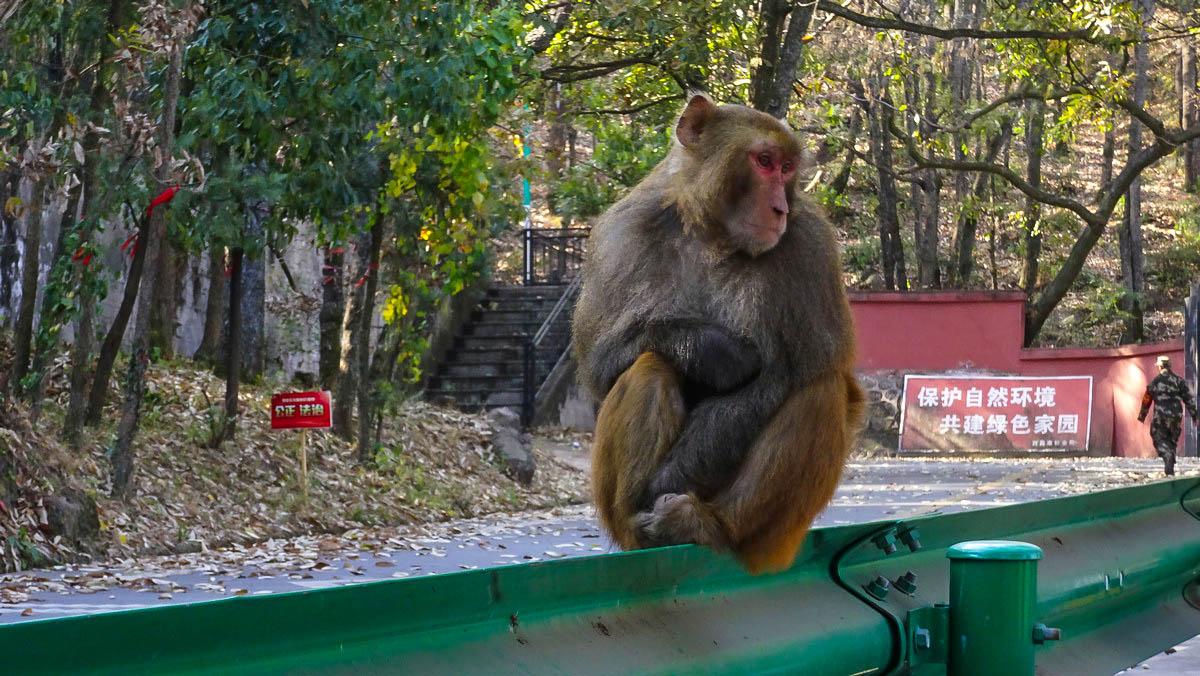 【新年游记】瀘山寻猴