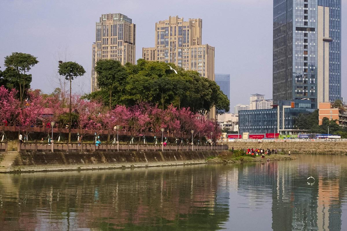 【春暖花开时】窒息的望江楼公园美景