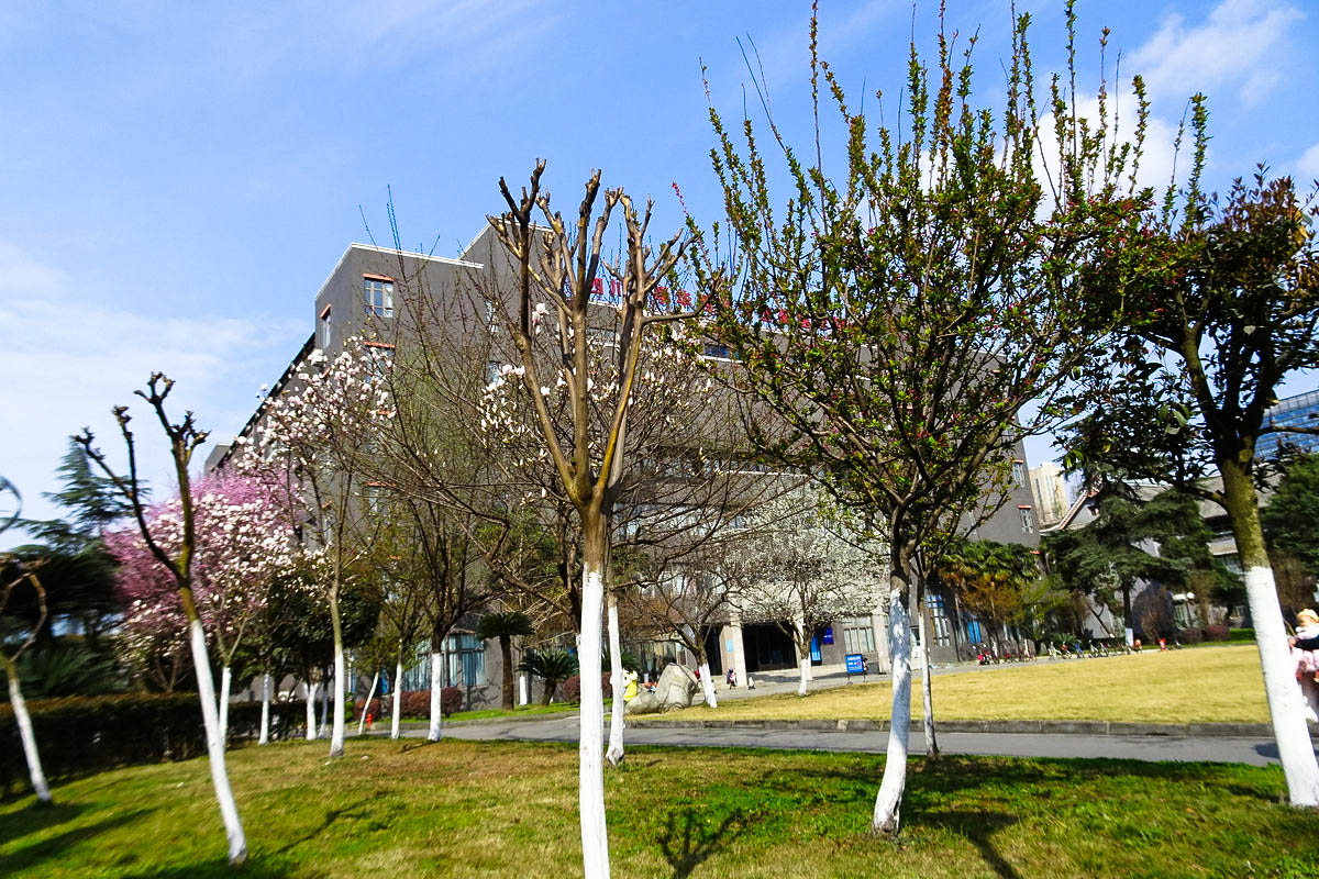华西校园的春天