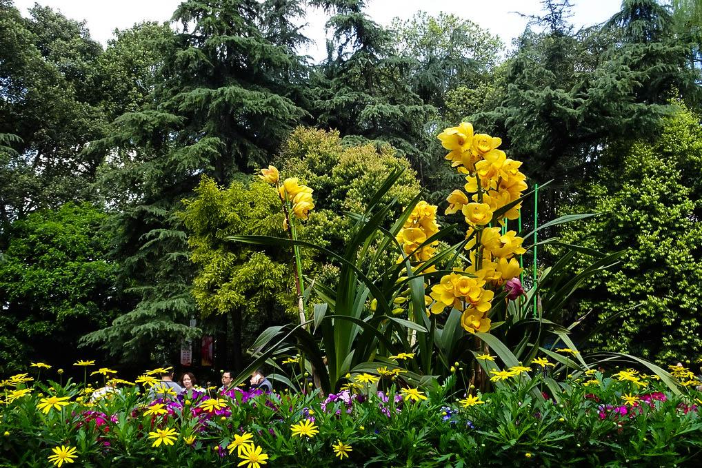 【赏花】人民公园的春天