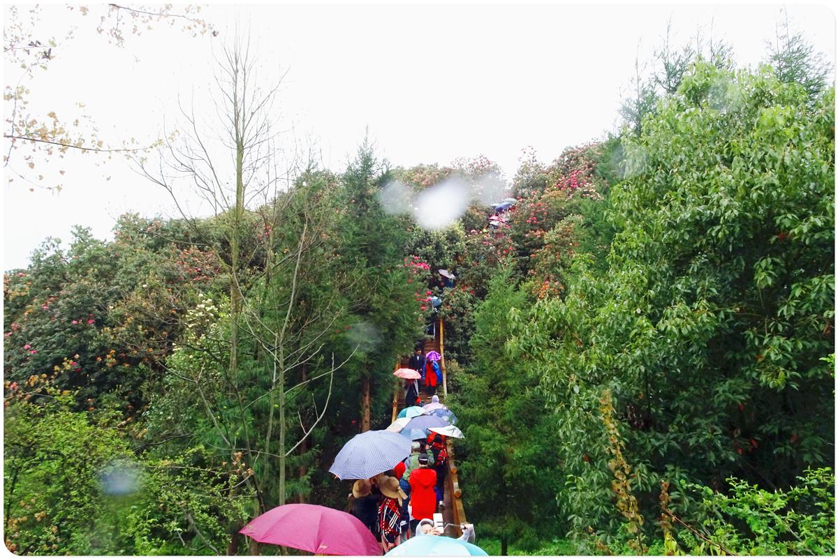 【踏青】冒风雨看杜鹃花