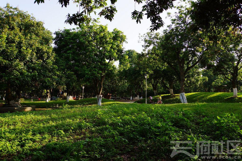 桂圆树景.jpg
