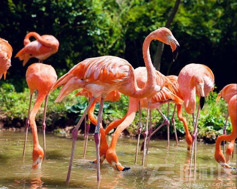 秋高气爽到青岛森林野生动物世界看动物撒欢