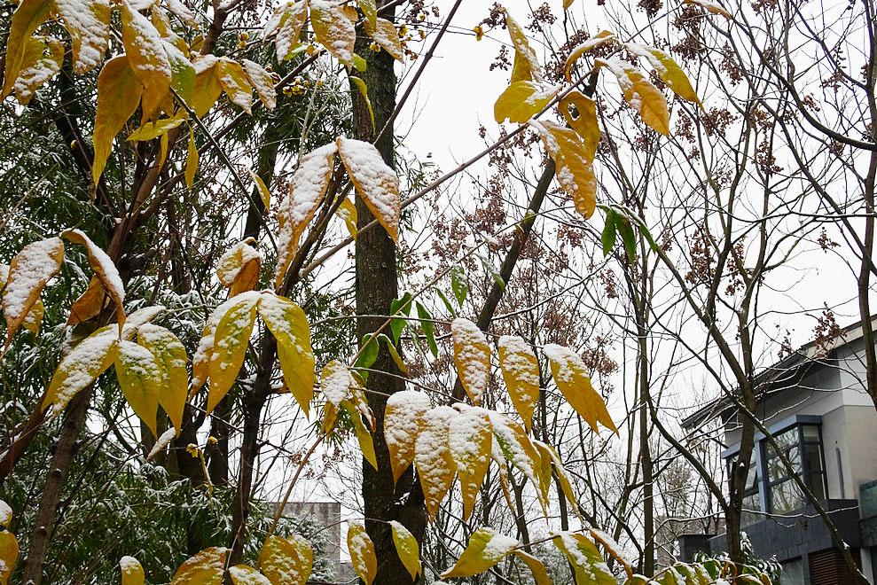 【今日大雪】祝大家幸福生活