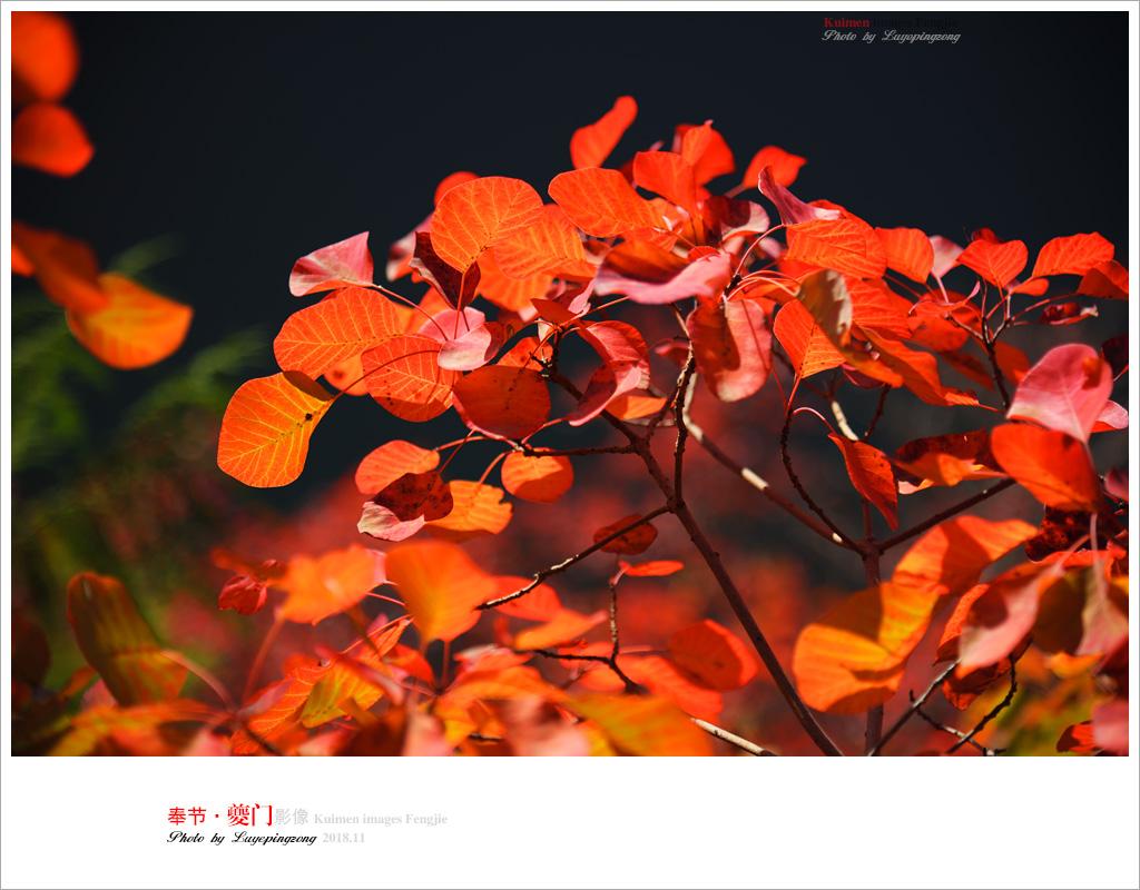 N_DSC1907.jpg