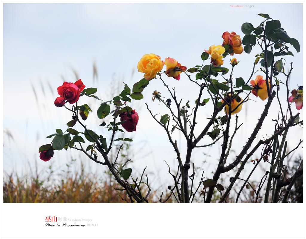 N_DSC2094.jpg