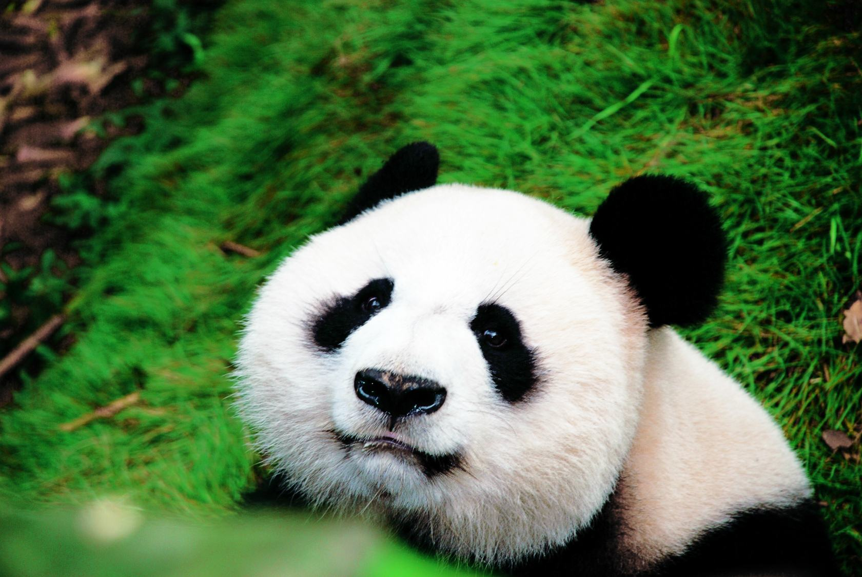 熊猫3.jpg