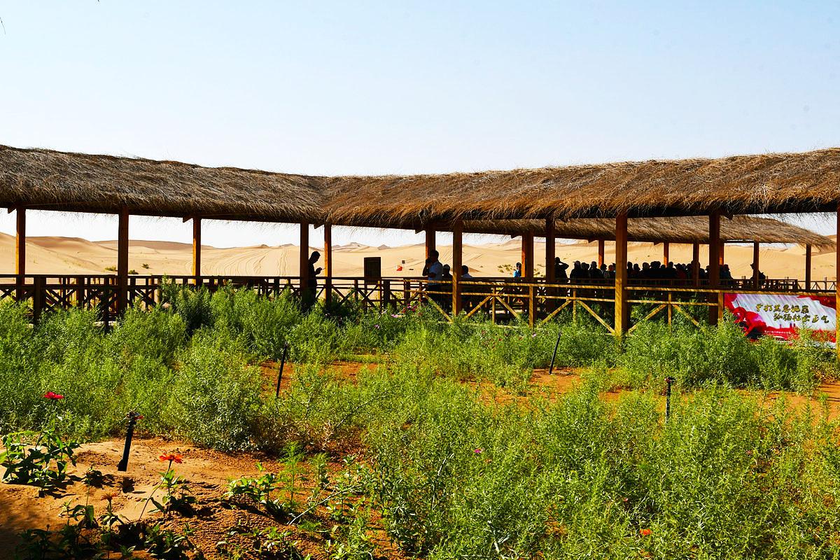 【西北旅游】沙漠中的绿色