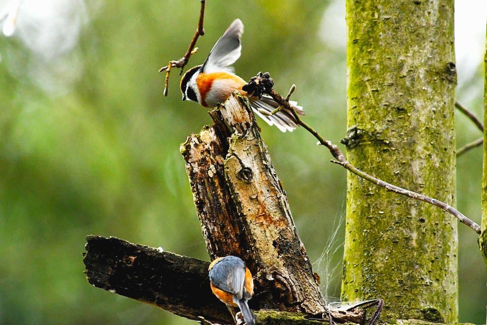 树上的鸟儿成双【二月里来是春天】树上的鸟儿成双对对