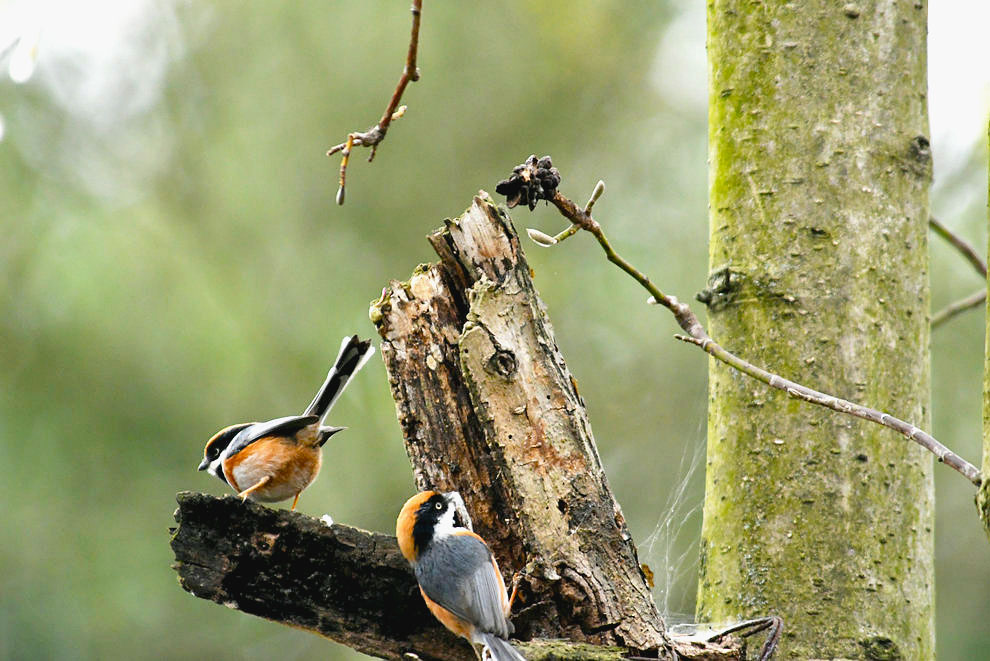 【二月里来是春天】树上的鸟儿成双对