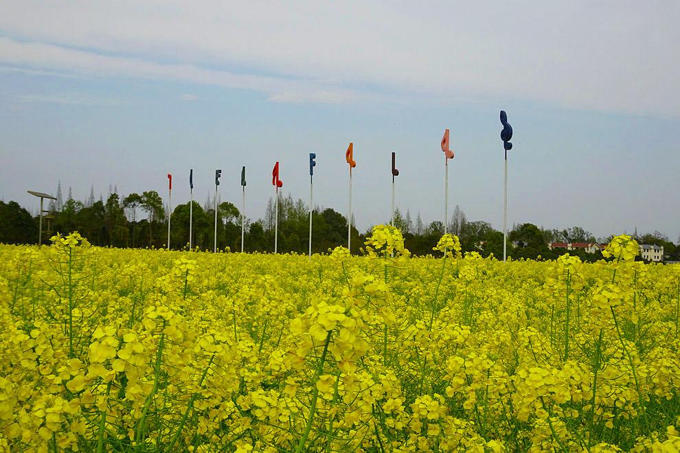 阳春三月风和日丽,点点春雨滋润大地,白云蓝天飘浮天际,音乐菜花奏响三月。