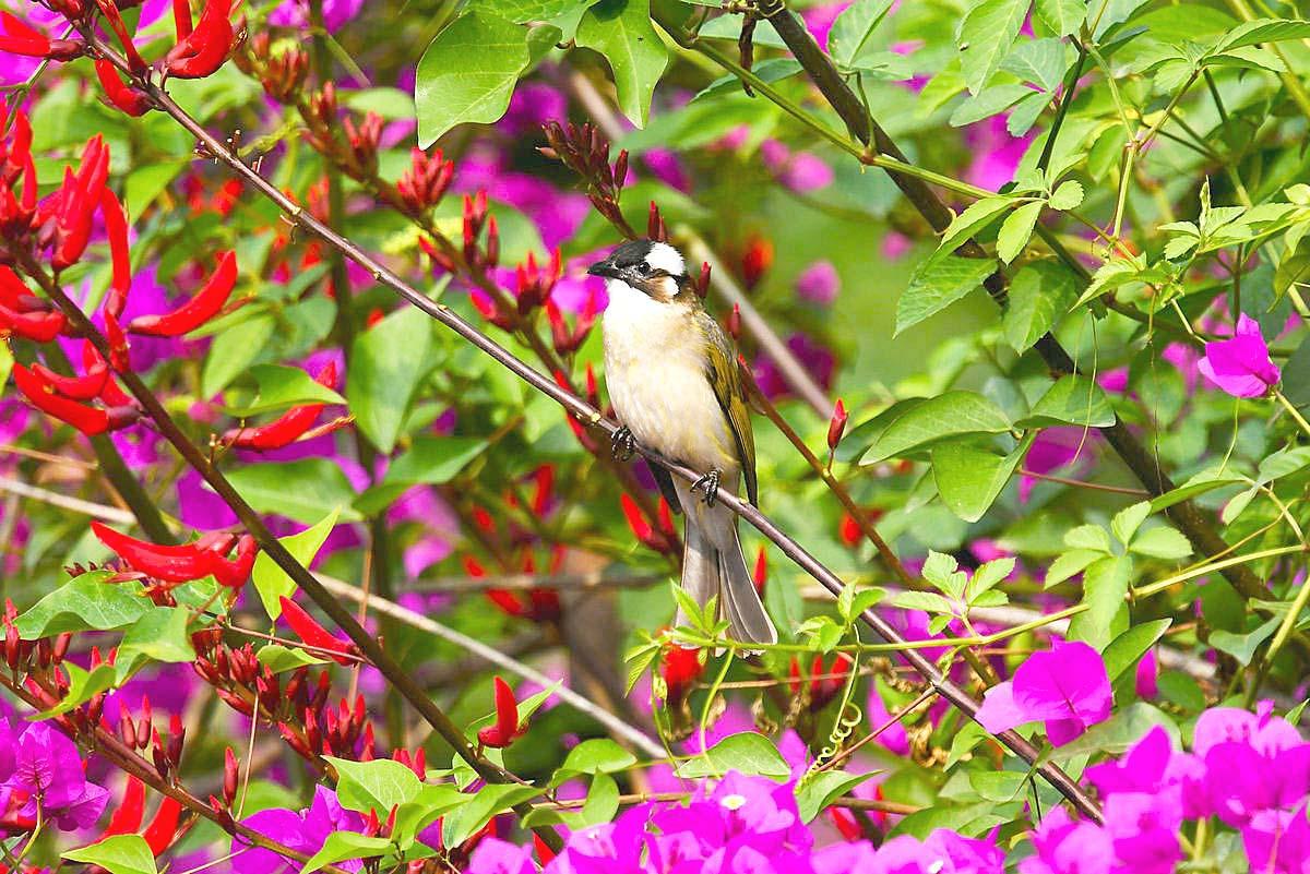 【五月天】植物园的花鸟