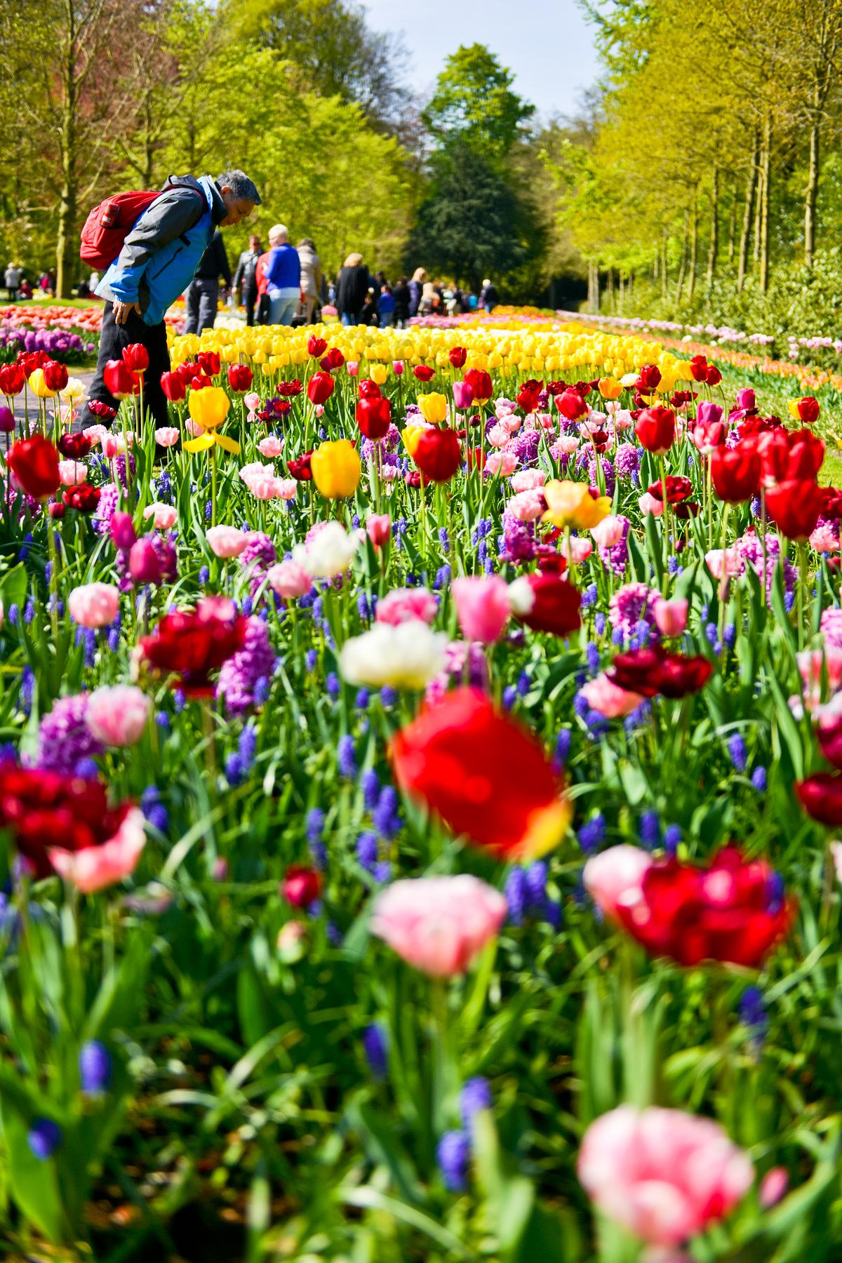 【五月天】请欣赏国外花卉
