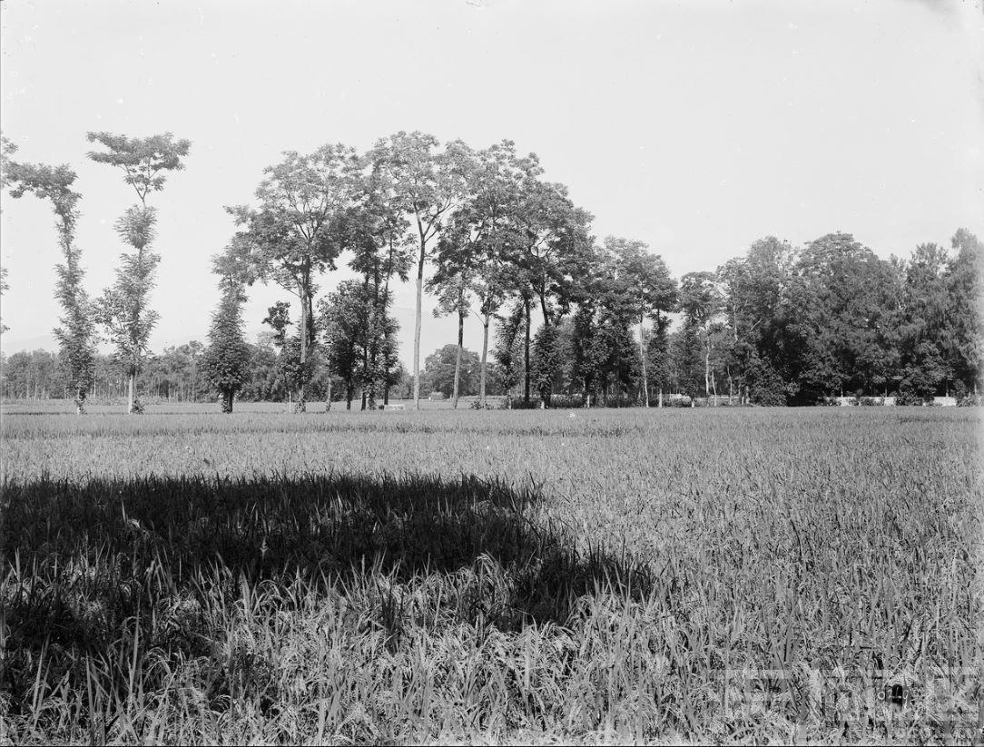 13 绵竹附近 1910.8.10..JPG