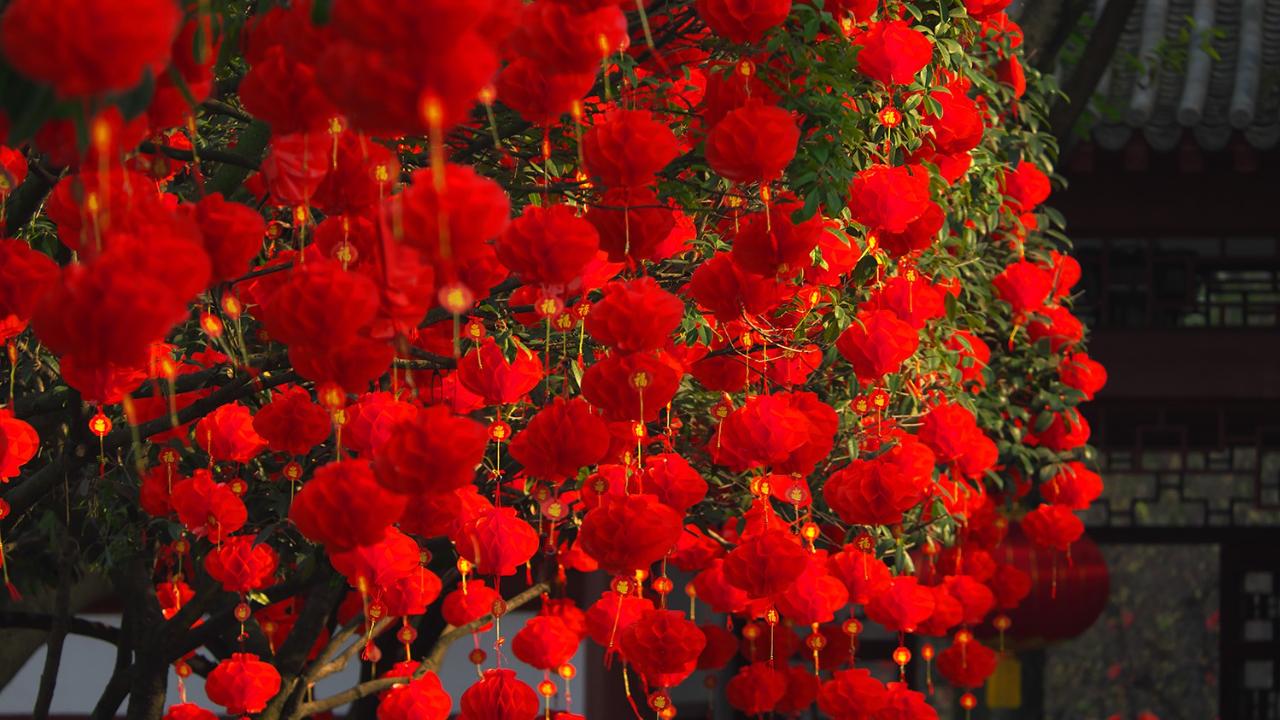 【小照】新春印象
