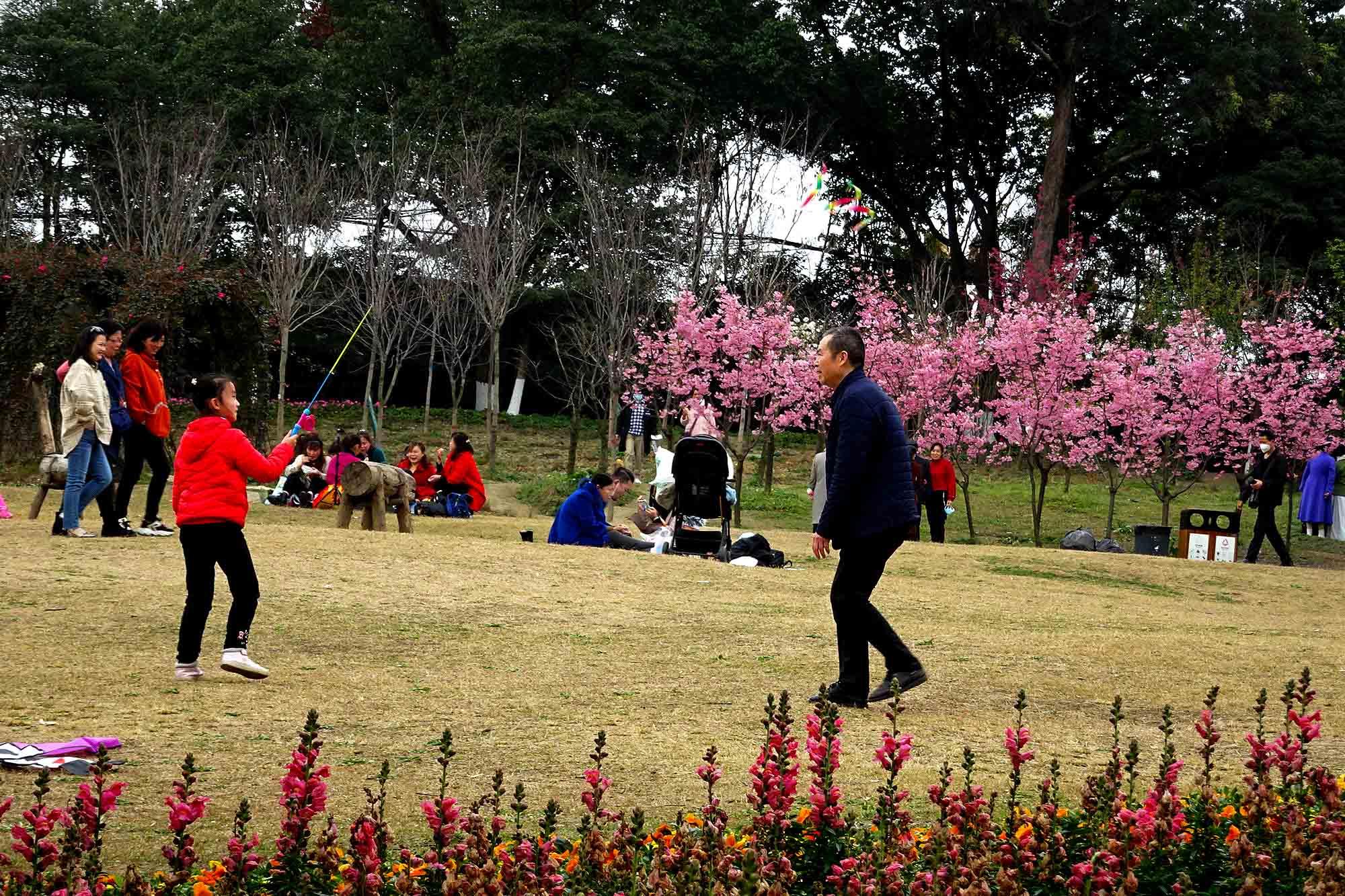 植物园里放风筝