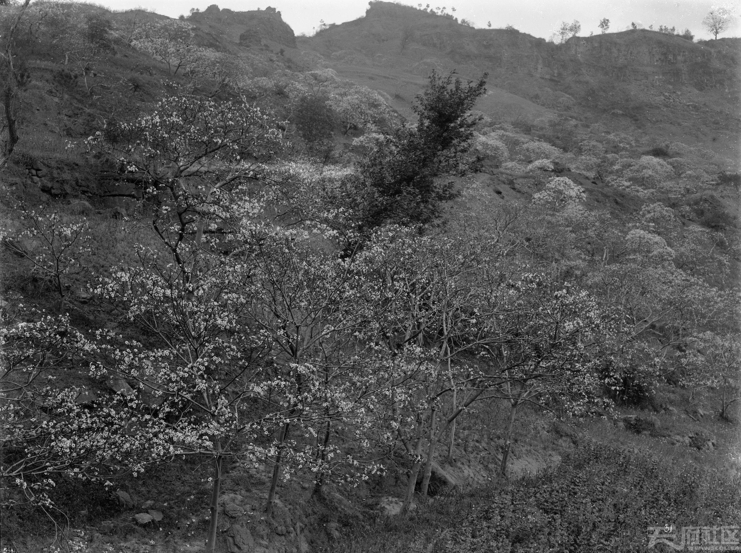 12 万县上游 鲜花盛开 1908.4.2..jpg