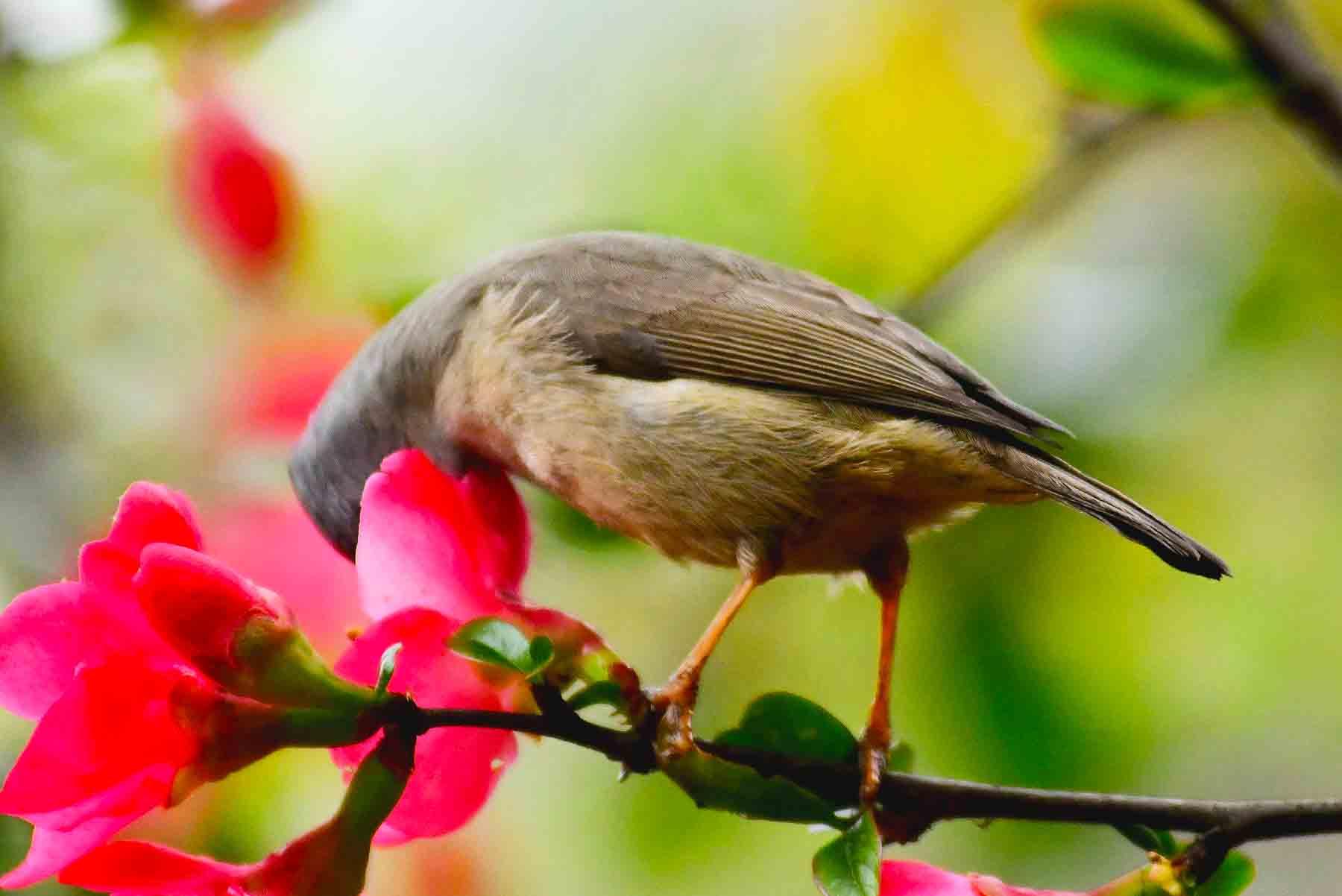 【鸟趣】花鸟图美