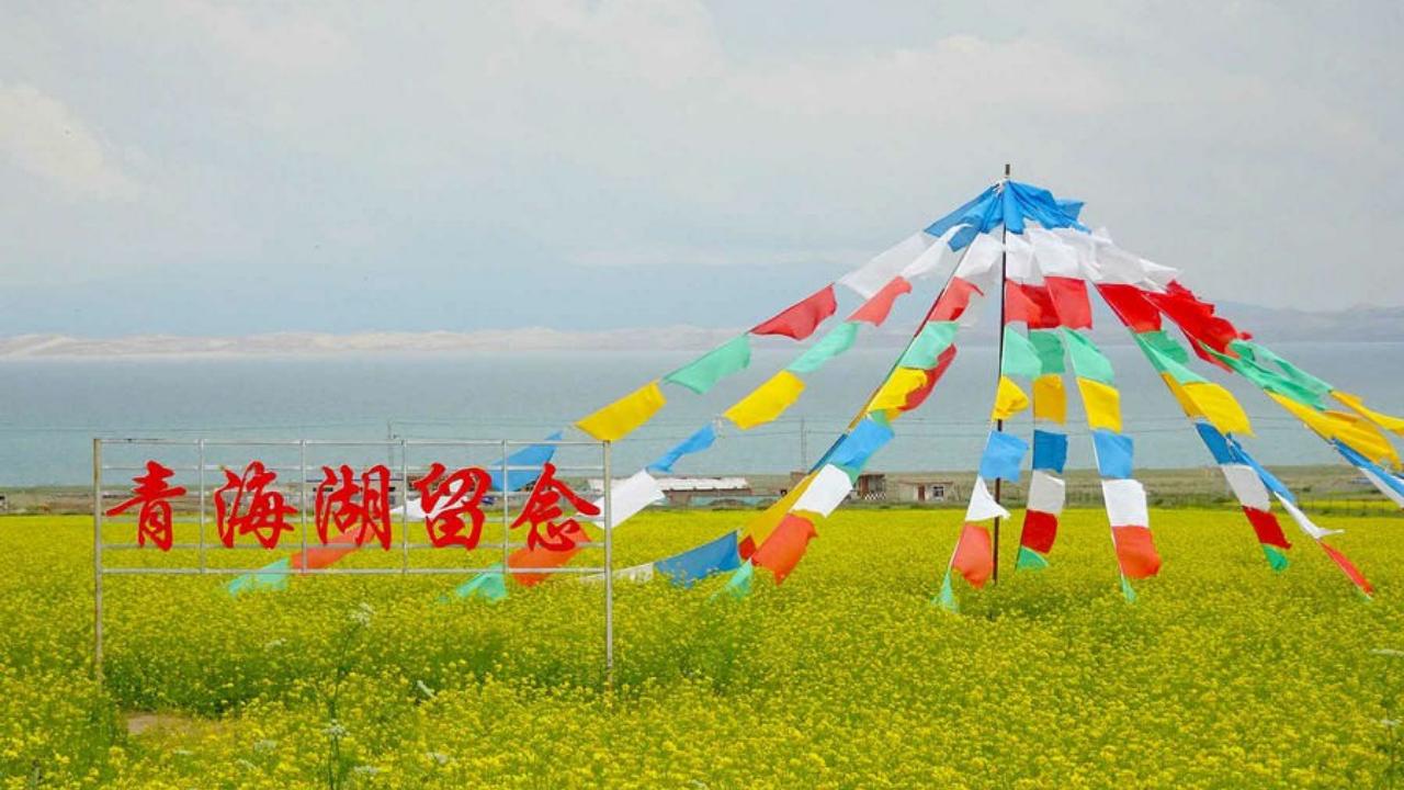 【青海自驾旅游】青海湖的油菜花