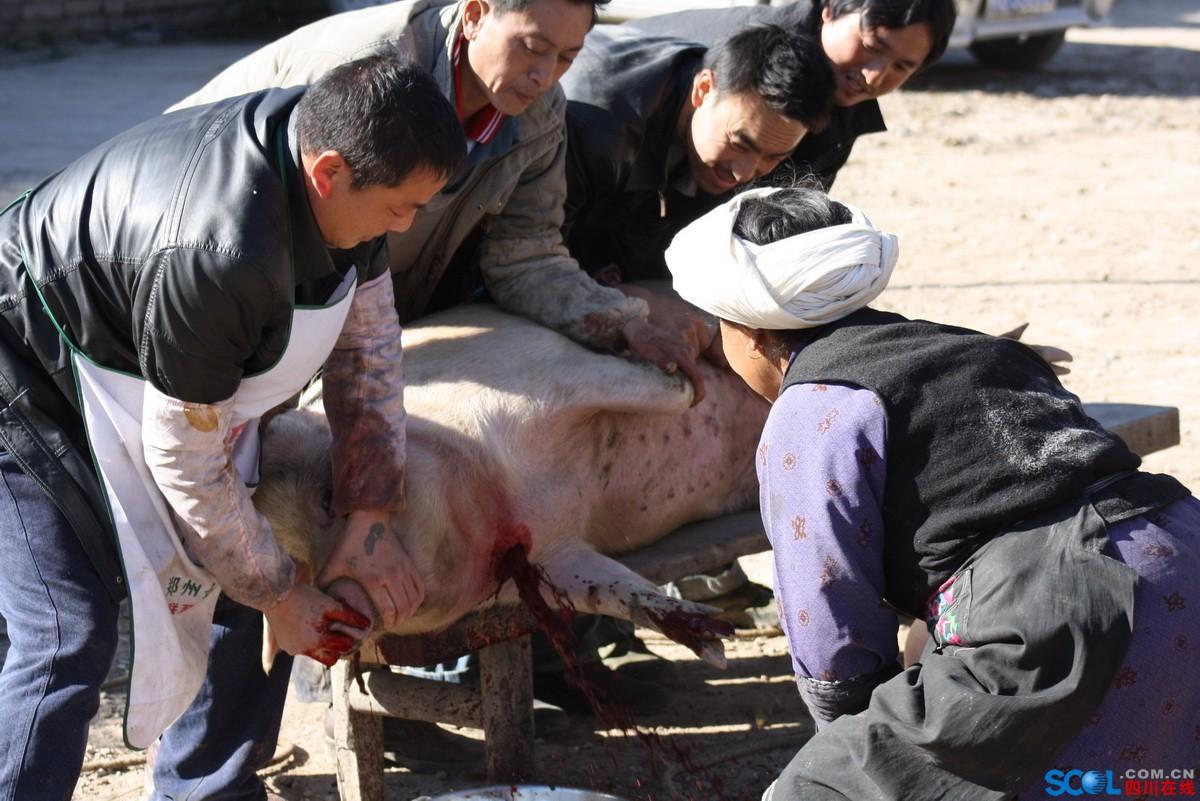 2010.12.5羌家山寨杀年猪.jpg
