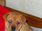 【萌物】蓝眼睛